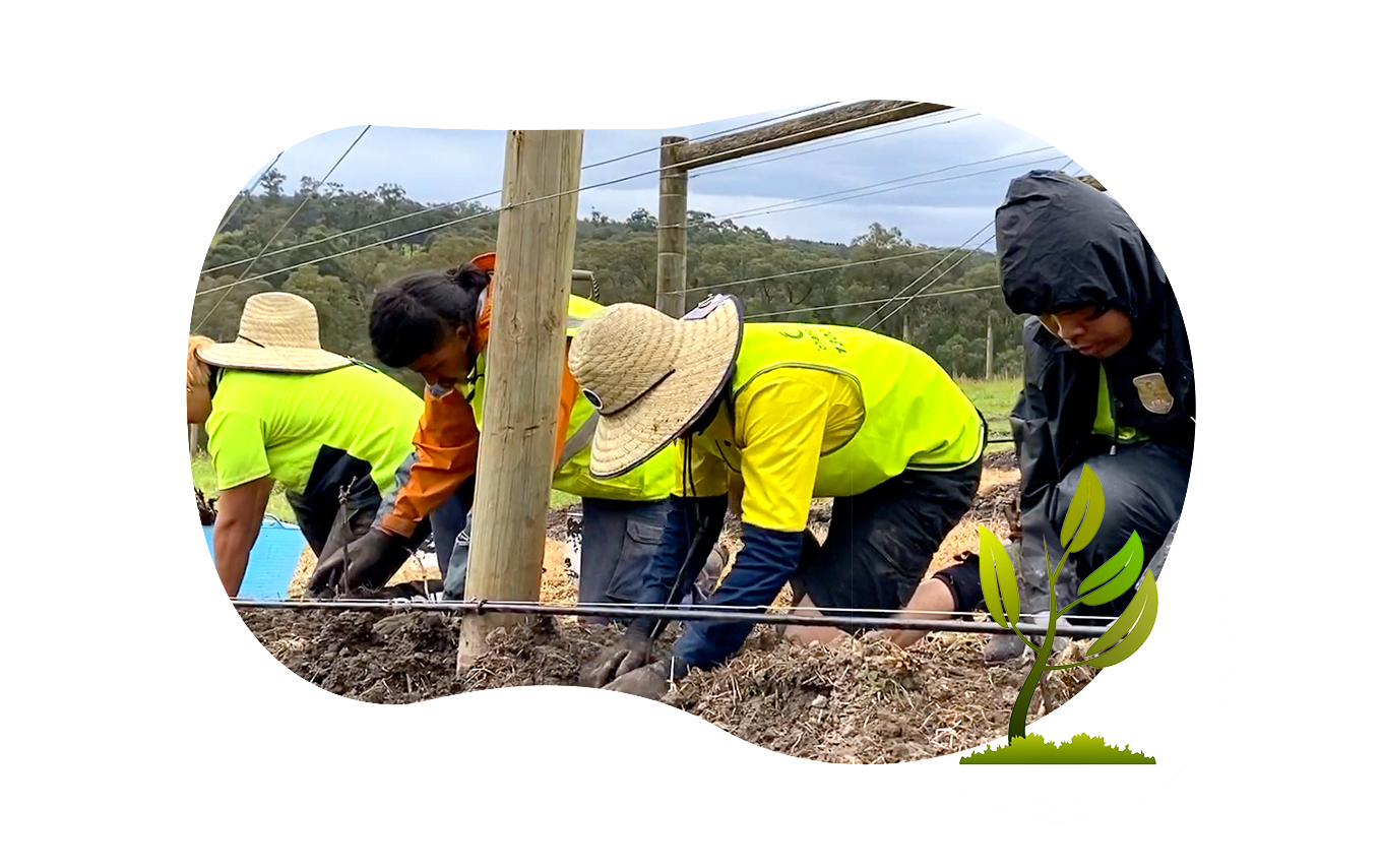 Chandler Agribusiness - image of farmworker planting crops