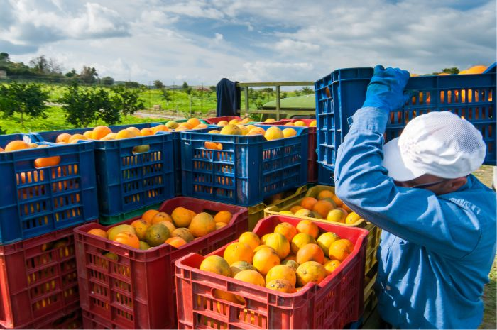 Chandler Agribusiness Labour hire