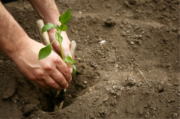 Chandler Agribusiness - Horticulture
